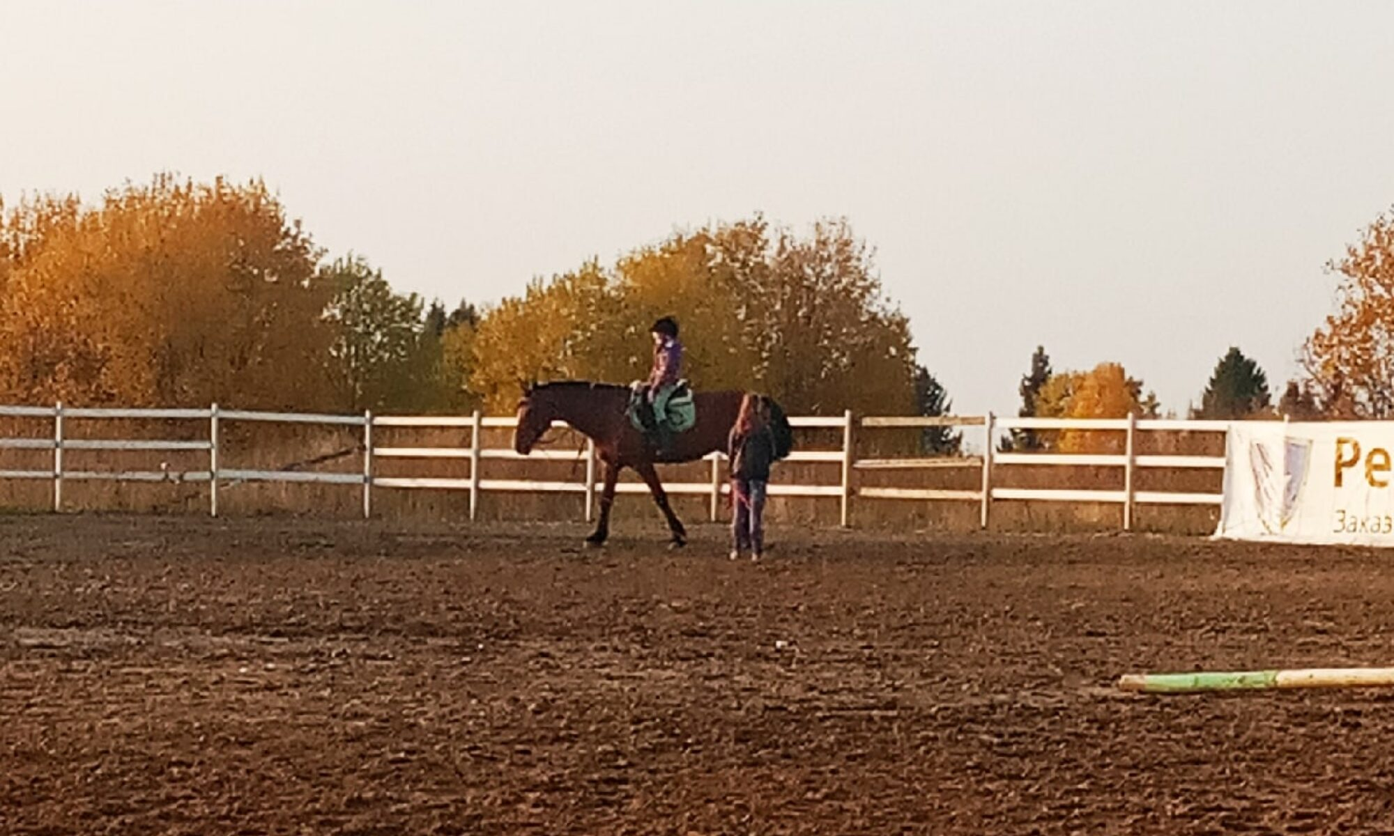Девочка и лошади